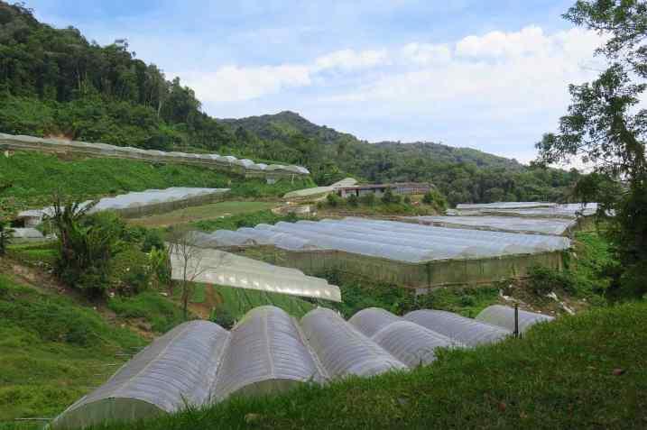 Serres Tanah Rata Cameron Highlands Malaisie blog voyage 2016 18