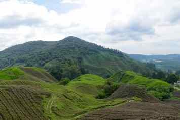 Plantation thé Tanah Rata Cameron Highlands Malaisie blog voyage 2016 19