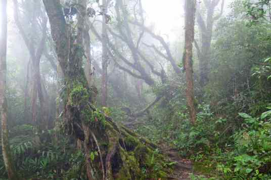 Trail 10 Tanah Rata Cameron Highlands Malaisie blog voyage 2016 30
