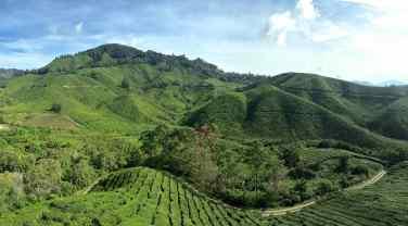 BOH Tea Plantation Tanah Rata Cameron Highlands Malaisie blog voyage 2016 7