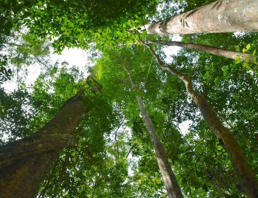 Trek Taman Negara Malaisie blog voyage 2016 16