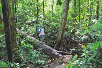 Trek Taman Negara Malaisie blog voyage 2016 17