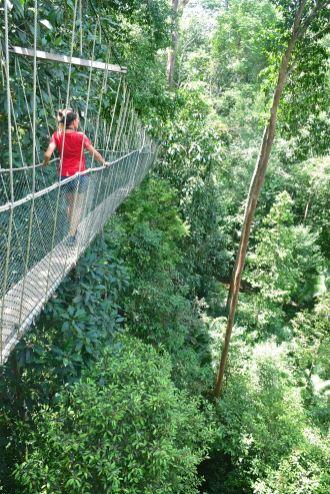 Canopee walkway Trek Taman Negara Malaisie blog voyage 2016 44