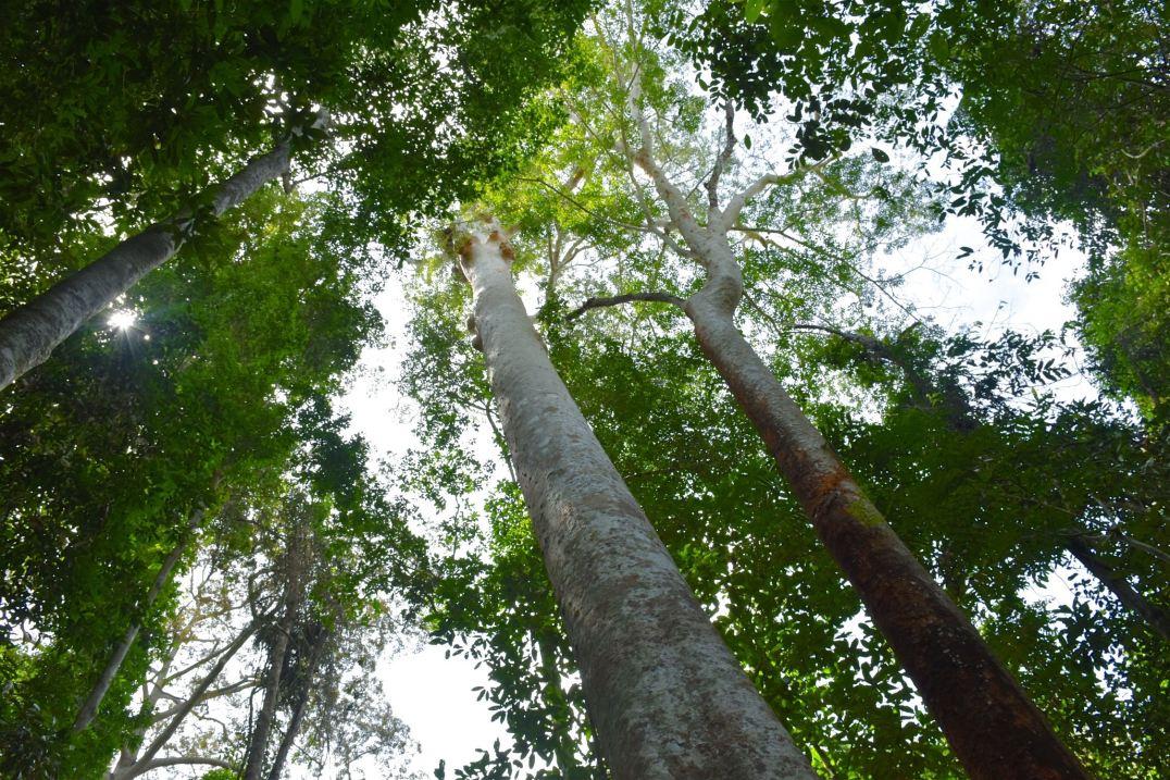 Trek Taman Negara Malaisie blog voyage 2016 8