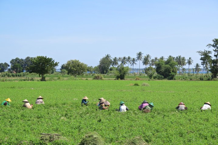 Rizières senggigi-lombok-indonesie-blog-voyage-2016-23