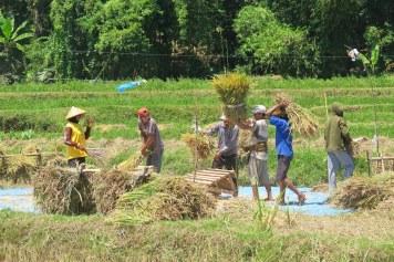 Riz senggigi-lombok-indonesie-blog-voyage-2016-29