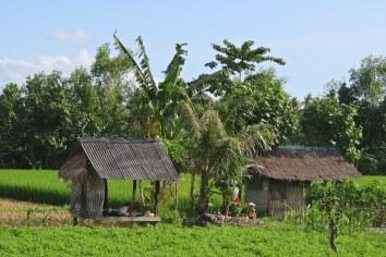 Champs senggigi-lombok-indonesie-blog-voyage-2016-44