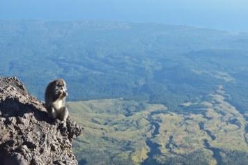 Singe alpiniste trek-rinjani-lombok-indonesie-blog-voyage-2016-23