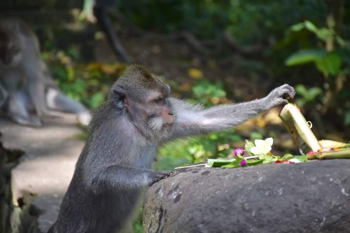 Monkey forest ubud-indonesie-blog-voyage-2016-50