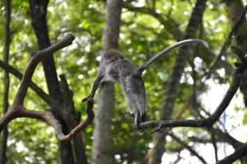 Monkey forest ubud-indonesie-blog-voyage-2016-52