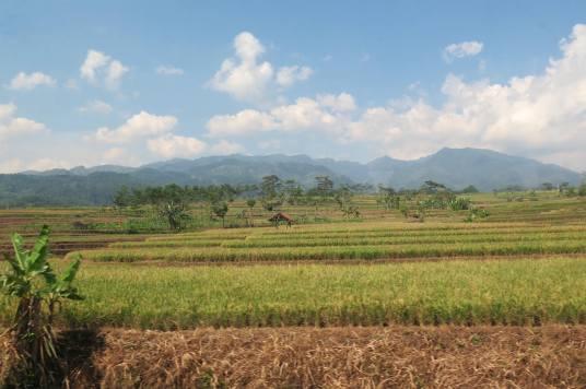 Campagne yogyakarta-borobudur-prambanan-indonesie-blog-voyage-2016-1