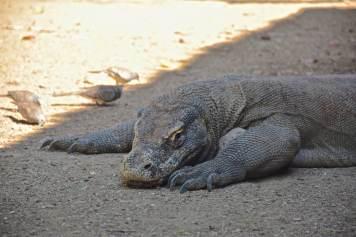 Dragons de Komodo (de la cuisine) #3