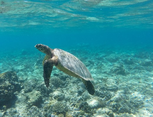 Tortue gili-air-gili-meno-lombok-indonesie-blog-voyage-2016
