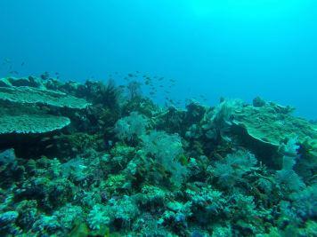 Les coraux défilent - Golden passage - Golden passage #4