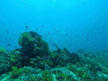 Coraux mous et bancs de poissons - Tatawa Besar #4