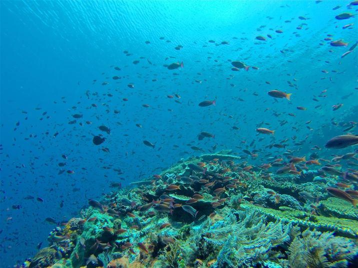 Nuages de poissons dans le split du courant - Batu Bolong #1