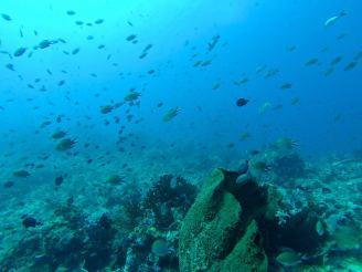Éponge et banc de poissons - Crystal Rock #3