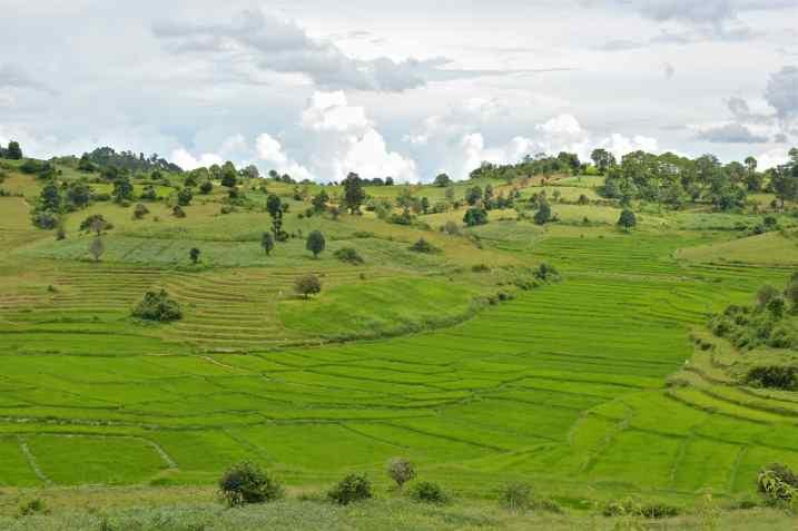 Rizieres Trek-Kalaw-Inle-Myanmar-blog-voyage-2016 45