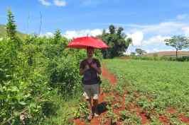 Parapluie Trek-Kalaw-Inle-Myanmar-blog-voyage-2016 77
