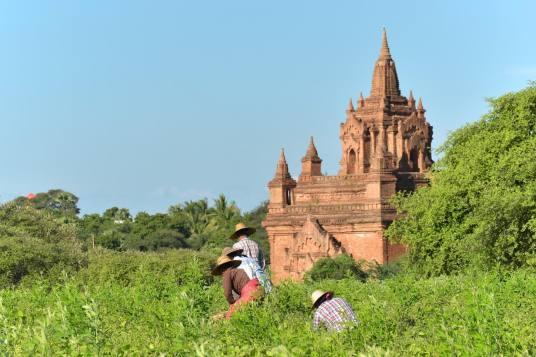Agriculteurs Decouverte-Bagan-Myanmar-Birmanie-blog-voyage-2016 20