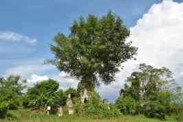 Stupa arbre Hsipaw Myanmar blog voyage 2016 16