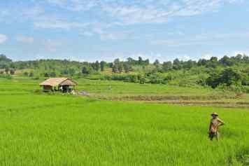 Rizières Hsipaw Myanmar blog voyage 2016 34