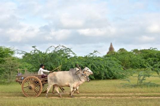 Charrette Montgolfieres-Bagan-Myanmar-Birmanie-blog-voyage-2016 36