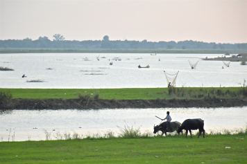 Buffles U bein Mandalay-Inwa-Ubein-Myanmar-Birmanie-blog-voyage-2016 69