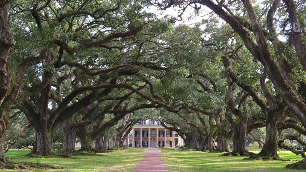 Oak alley plantation Un an Floride blog voyage 2019 25