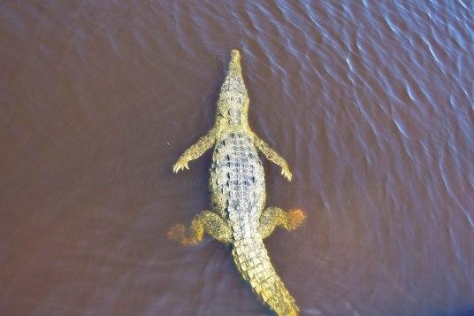 Crocodile Un an Floride blog voyage 2019 4