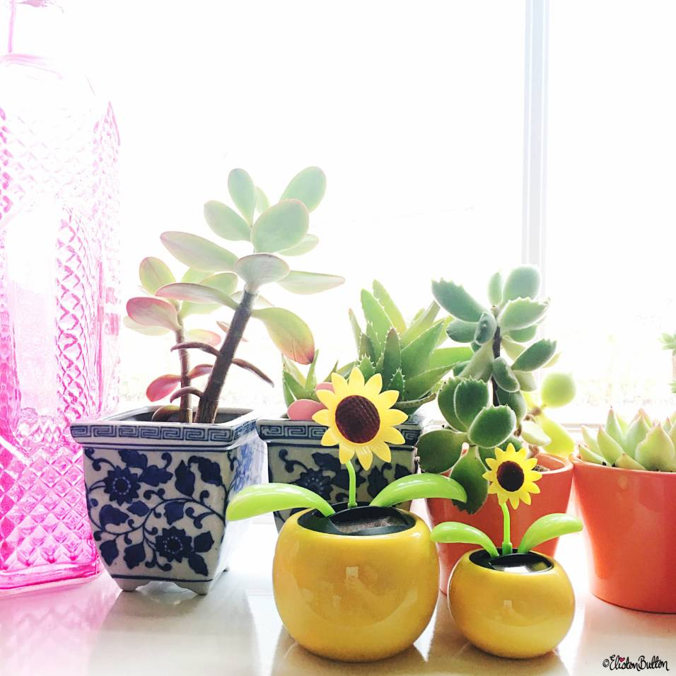 A Sunny Windowsill of Succulents and Sunflower Solar Flowers - Around Here…August 2016 at www.elistonbutton.com - Eliston Button - That Crafty Kid – Art, Design, Craft & Adventure.