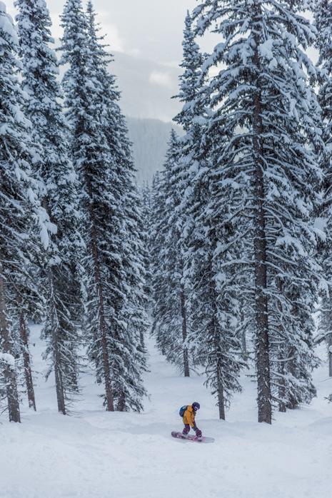 Revelstoke Tree Run skiing