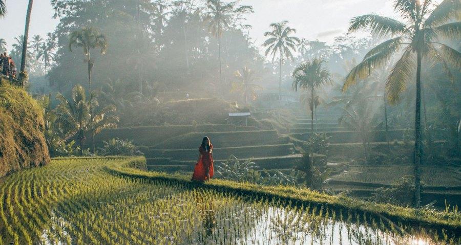 travel blog bali tegalalang