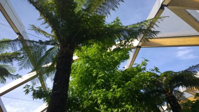 Tree Canary Wharf rooftop garden