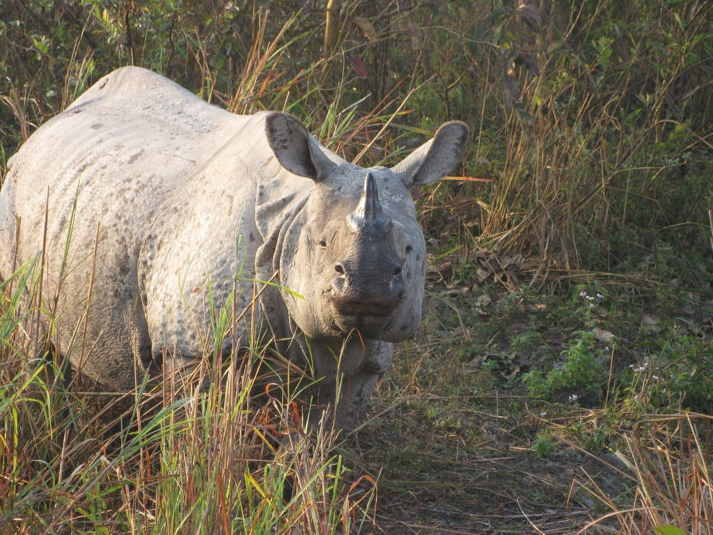 One-Horned Rhinos photo