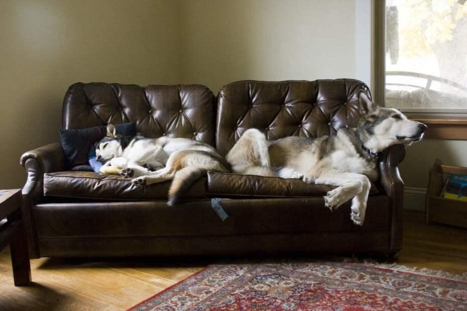 5390706011_b99bd5d547_b_couch-sleep