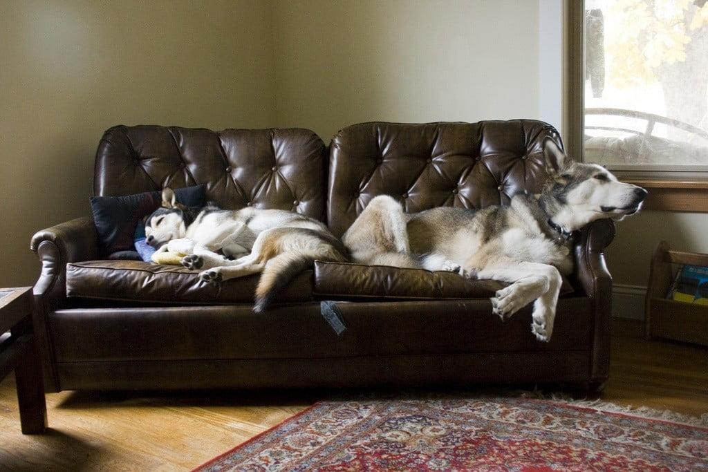 couch sleep photo