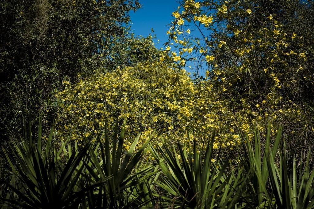 Ocala National Forest photo