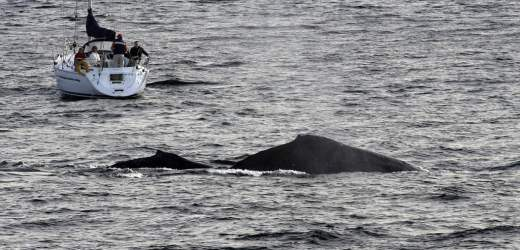 Why You Should Go Whale Watching in Sydney during the Winters