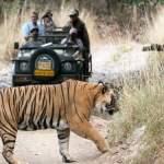 Wildlife (Haridwar Rishikesh Tourism)