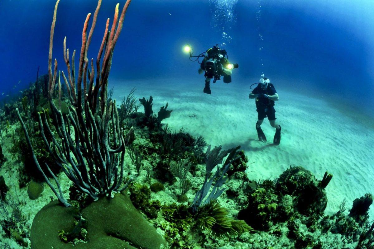 corals-divers-diving