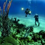 corals-divers-diving
