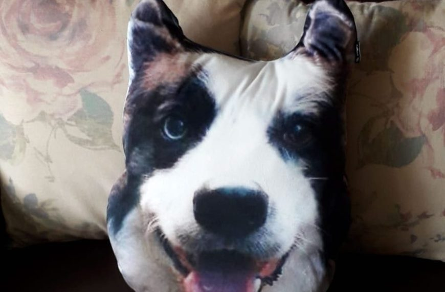 Dogsy Review – I Turned My Dog's Face Into a Personalised Pillow