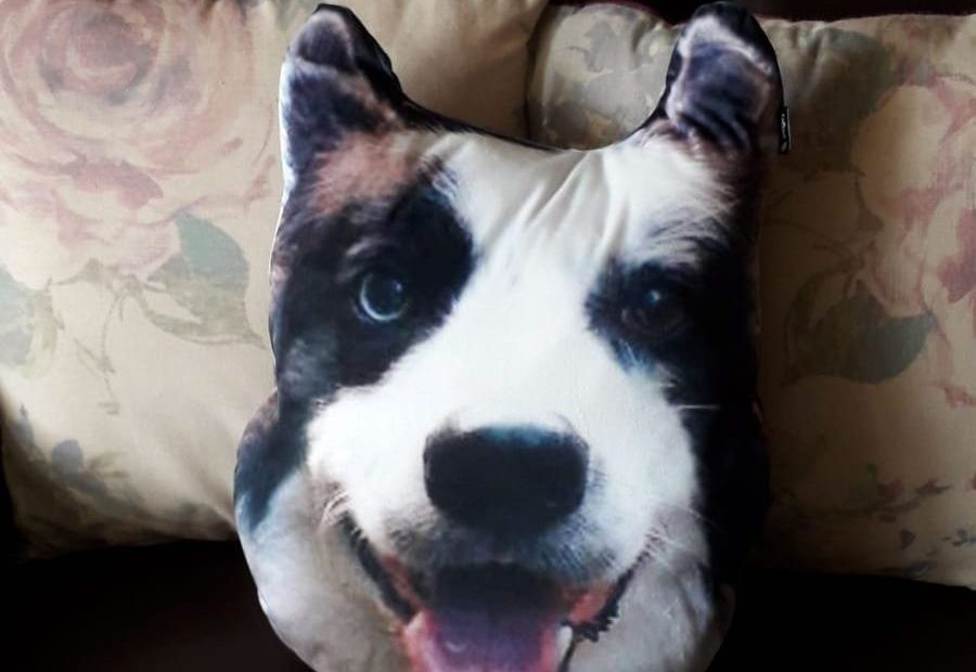 Dogsy Review - I Turned My Dog's Face Into a Personalised Pillow 3