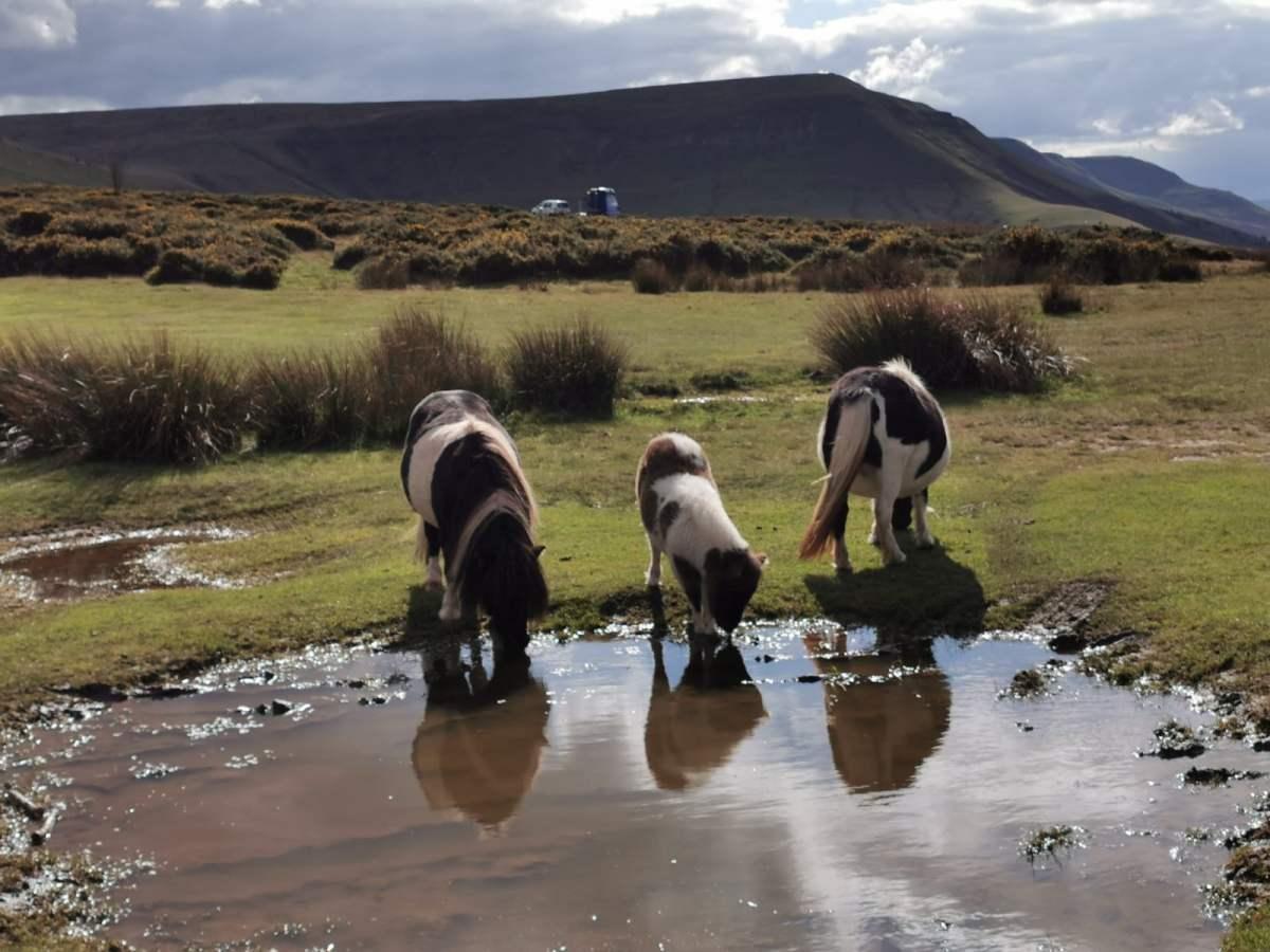 Tiny Horses on Hay Bluff! 3