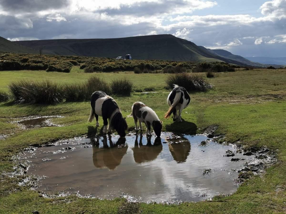 Tiny Horses on Hay Bluff! 2