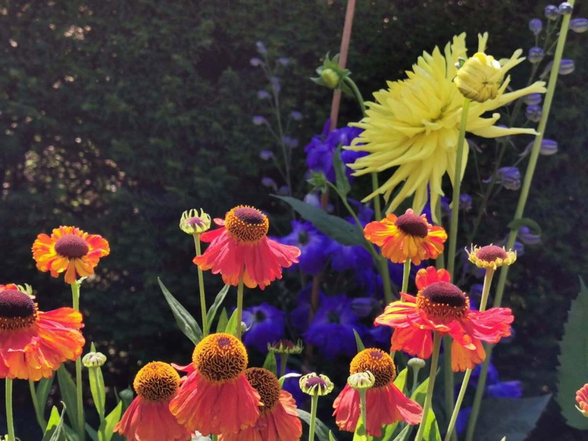 Bateman's Garden: A Kaleidoscope of Colours at Rudyard Kipling's National Trust Home 1
