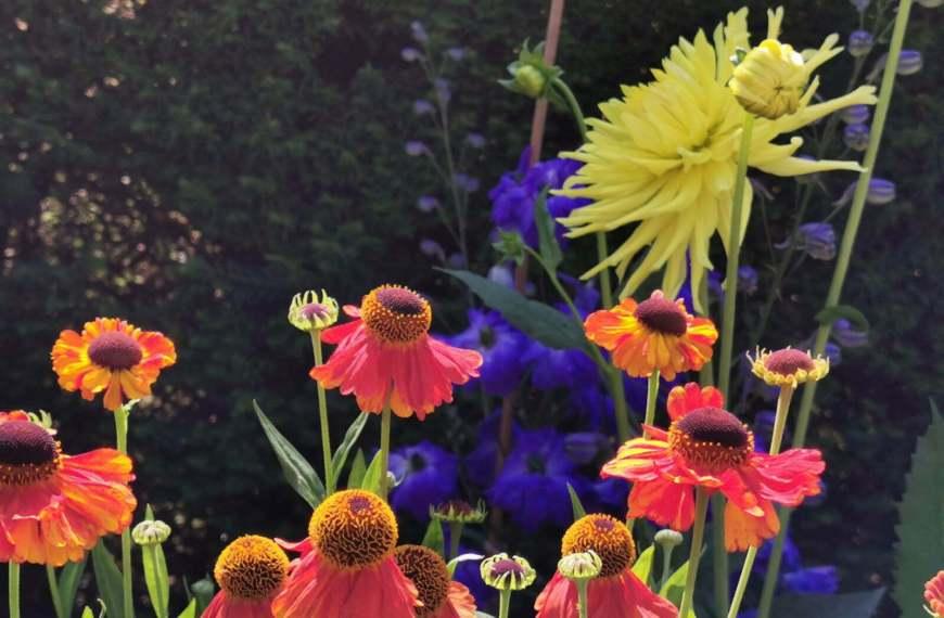 Bateman's Garden: A Kaleidoscope of Colours at Rudyard Kipling's National Trust Home