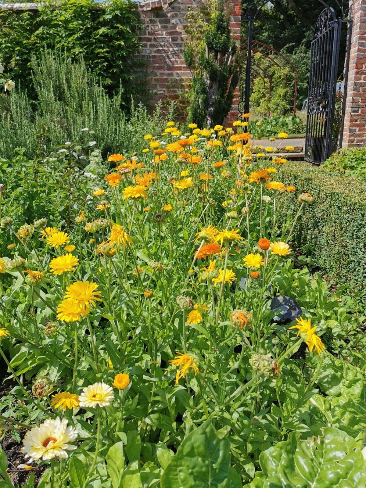 Bateman's Garden: A Kaleidoscope of Colours at Rudyard Kipling's National Trust Home 12
