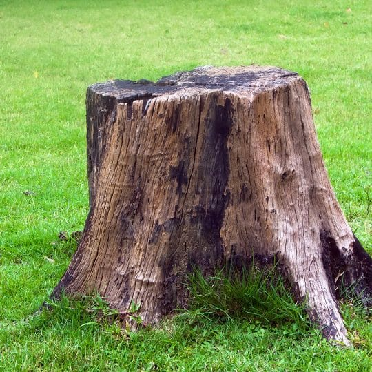 What to do with a Tree Stump